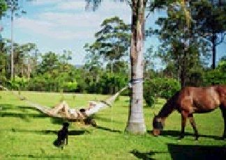 Neds Bed Horse O Tel - Lightning Ridge Tourism
