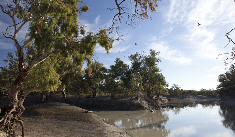 Darling River Campground