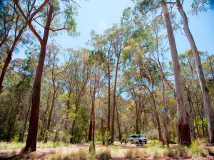 Coolah Tops National Park Camping - Lightning Ridge Tourism
