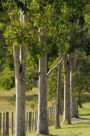 Stringybark Cottages - Lightning Ridge Tourism
