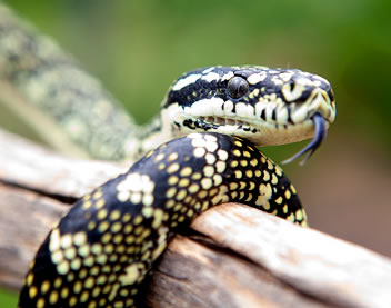 Reptile Encounters - Lightning Ridge Tourism