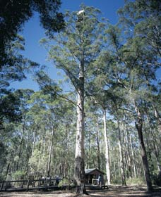 Diamond Tree Lookout Manjimup - Lightning Ridge Tourism