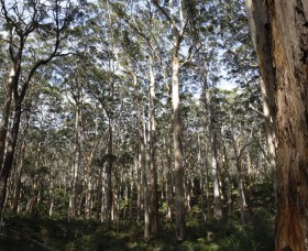 Boranup Karri Forest - Lightning Ridge Tourism