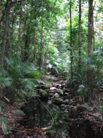 Mossman Gorge Rainforest Circuit Track Daintree National Park - Lightning Ridge Tourism