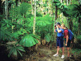 Mount Sorrow Ridge Trail Daintree National Park - Lightning Ridge Tourism