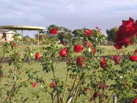 Elizabeth Park Rose Gardens - Lightning Ridge Tourism