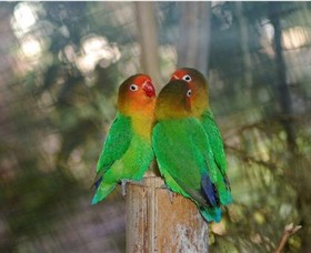 Ballarat Bird World - Lightning Ridge Tourism