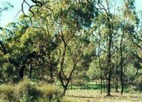 Leaghur State Park - Lightning Ridge Tourism
