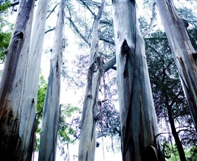 Dandenong Ranges National Park - Lightning Ridge Tourism