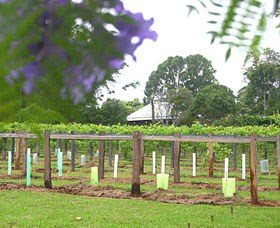 Douglas Vale Historic Homestead  Vineyard - Lightning Ridge Tourism