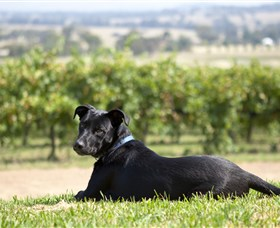 Moothi Estate Vineyard and Cellar Door - Lightning Ridge Tourism