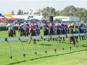 Morphettville Racecourse - Lightning Ridge Tourism