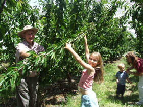 Forest Range Cherries - Lightning Ridge Tourism