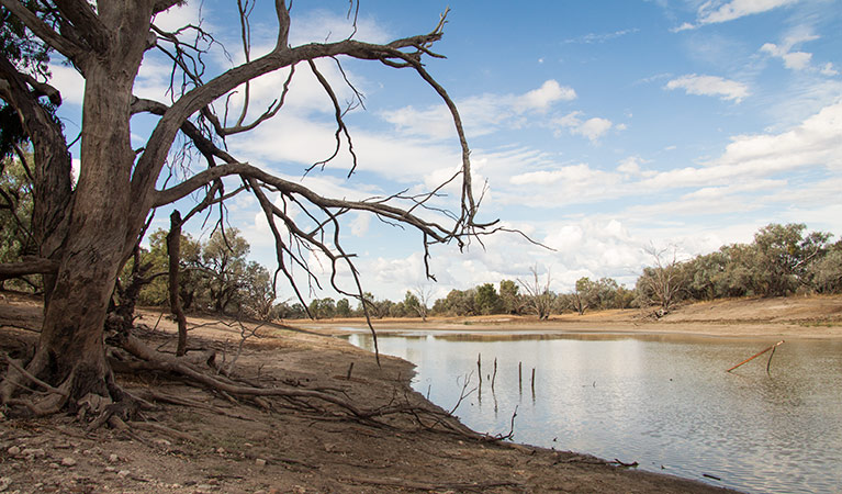 Toorale National Park - Lightning Ridge Tourism