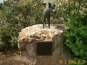 Dingo Statue - Lightning Ridge Tourism
