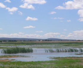 Fivebough Wetlands - Lightning Ridge Tourism