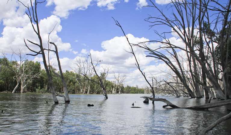 Murrumbidgee Valley National Park - Lightning Ridge Tourism