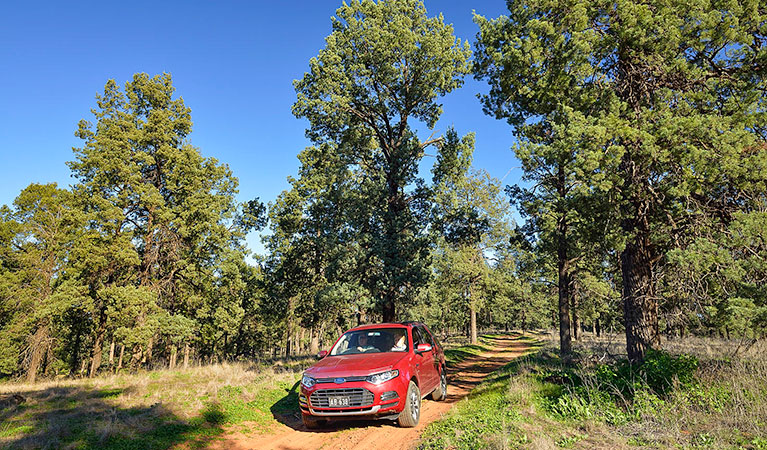 Forest drive - Lightning Ridge Tourism