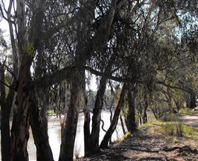 Mia Forest Drives Narrandera - Lightning Ridge Tourism