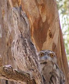 Bird Watching - Lightning Ridge Tourism