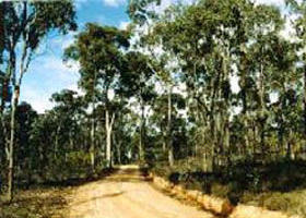 Paddys Ranges State Park - Lightning Ridge Tourism