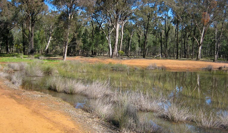 Beni State Conservation Area - Lightning Ridge Tourism