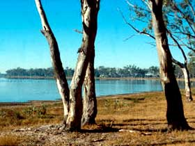 Lake Broadwater Conservation Park - Lightning Ridge Tourism