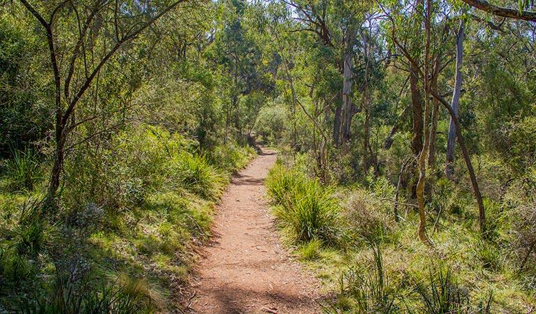 Mares Forest Creek walking track - Lightning Ridge Tourism