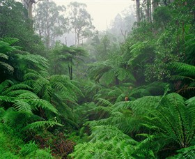 Tarra Bulga National Park - Lightning Ridge Tourism