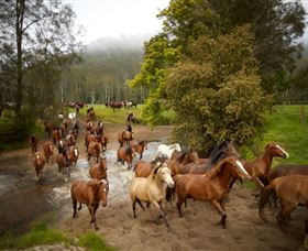 Glenworth Valley Horse Riding - Lightning Ridge Tourism