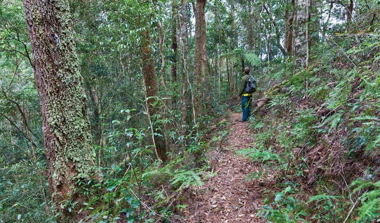 Blackbutt walking track - Lightning Ridge Tourism