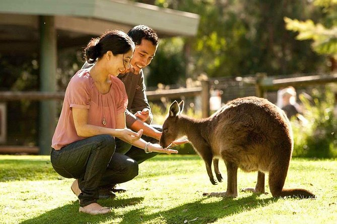 Very Best of Perth Tour - Wildlife Park  City Highlights Tour - Lightning Ridge Tourism