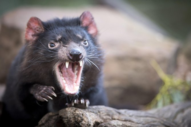Port Arthur and Tassie Devils Active Day Tour from Hobart - Lightning Ridge Tourism