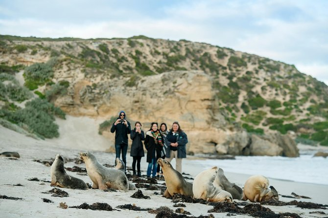 Small-Group Kangaroo Island WD Tour from Adelaide