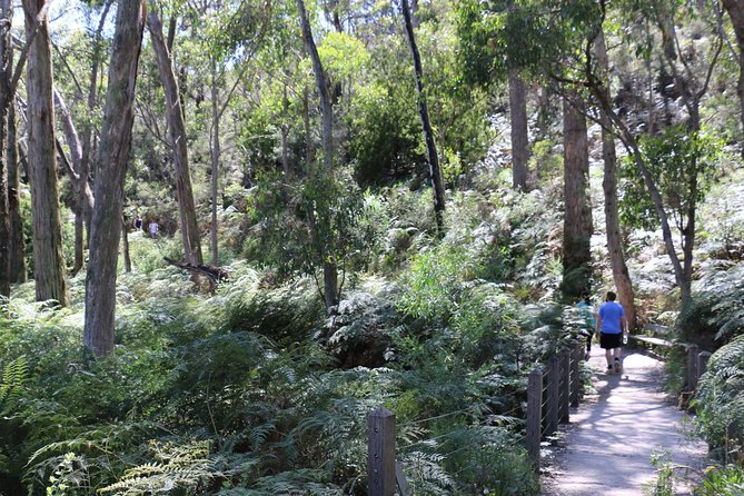 Self-Guided Waterfall Gully to Mount Lofty Hike from Adelaide