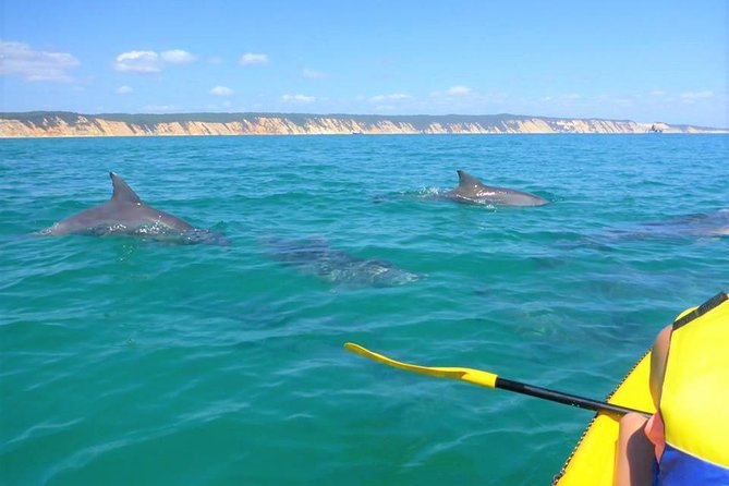 Half-Day Kayak with Dolphins and 4WD Beach Drive from Rainbow Beach - Lightning Ridge Tourism