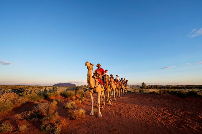 Uluru Camel Express Sunrise or Sunset Tours - Lightning Ridge Tourism