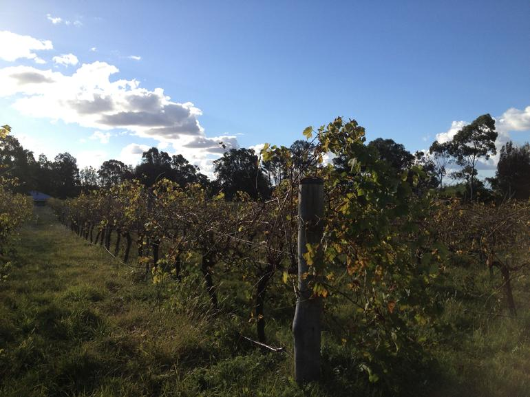 Hunter Valley Wineries Small-Group Tour - Lightning Ridge Tourism