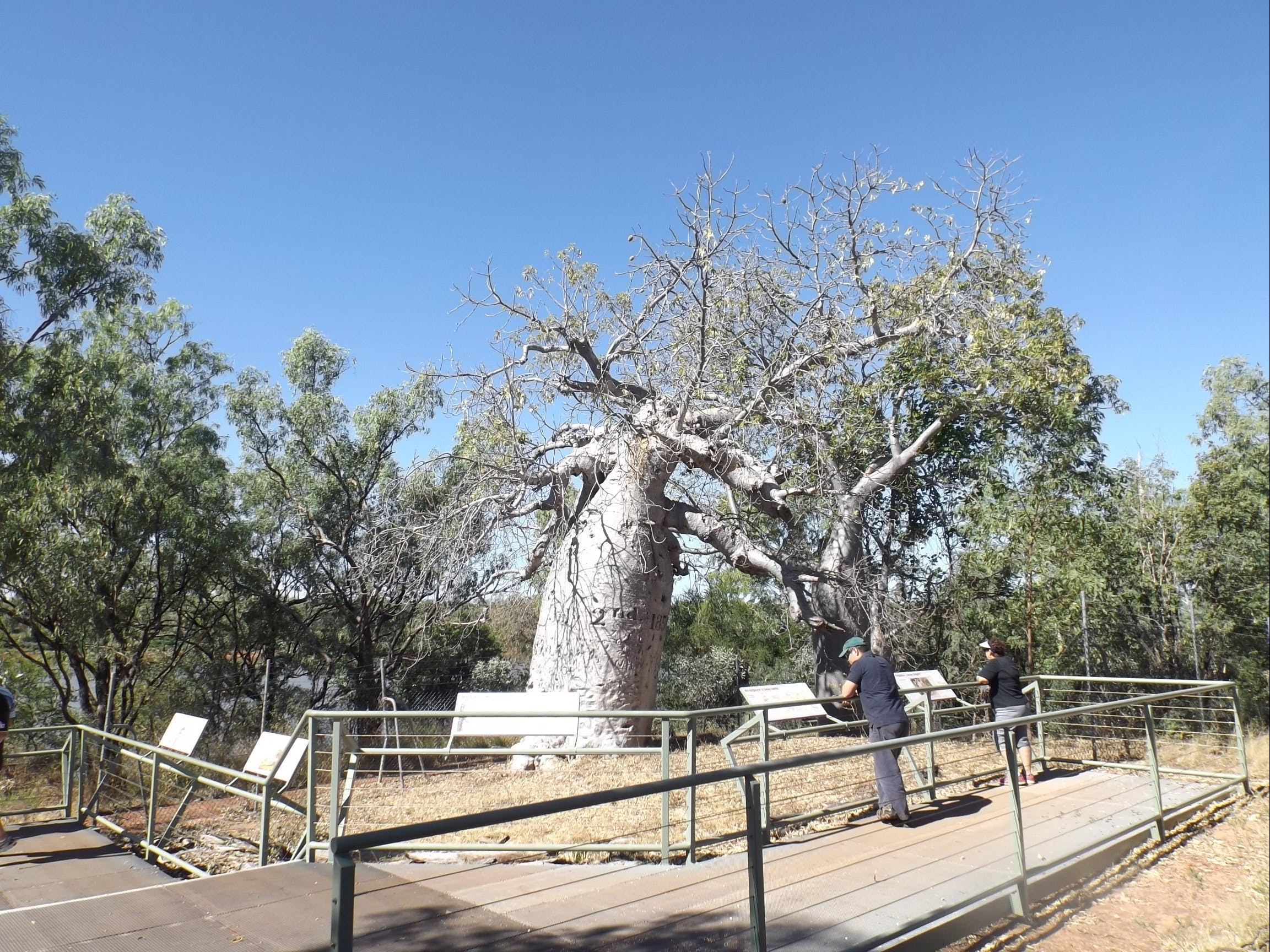Gregory's Tree Timber Creek - Lightning Ridge Tourism