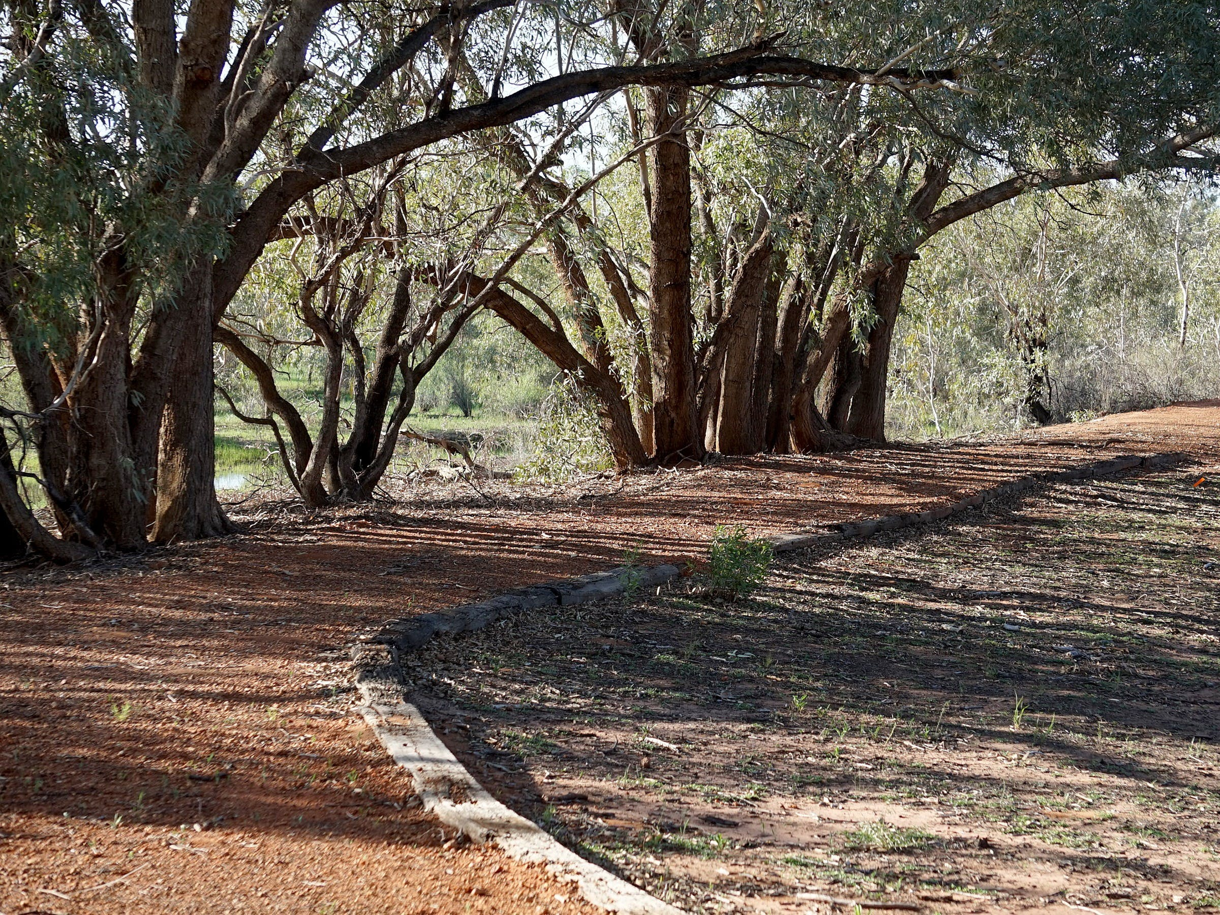 Warrego Floodplain walking track - Lightning Ridge Tourism