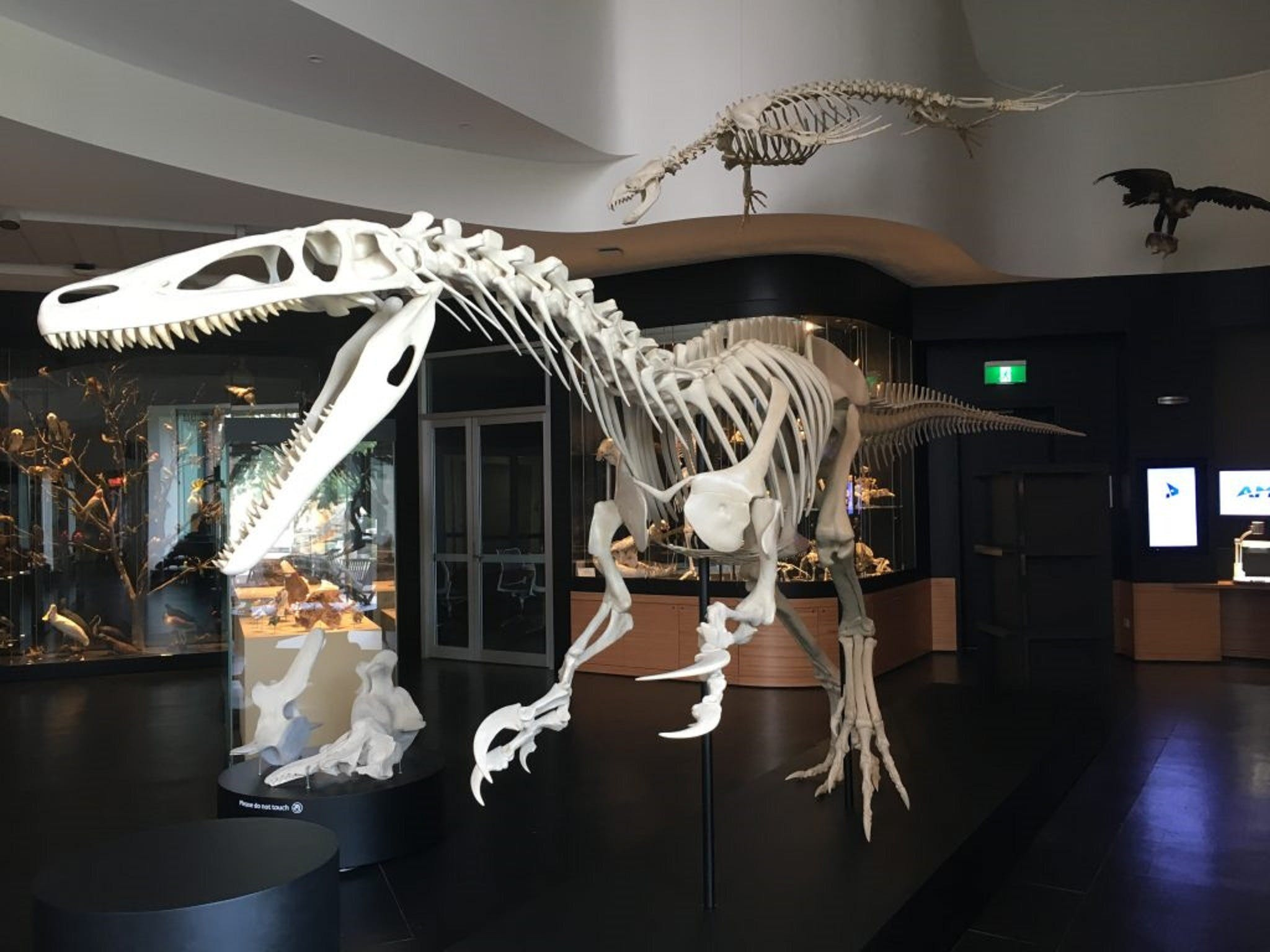 UNE Natural History Museum - Lightning Ridge Tourism