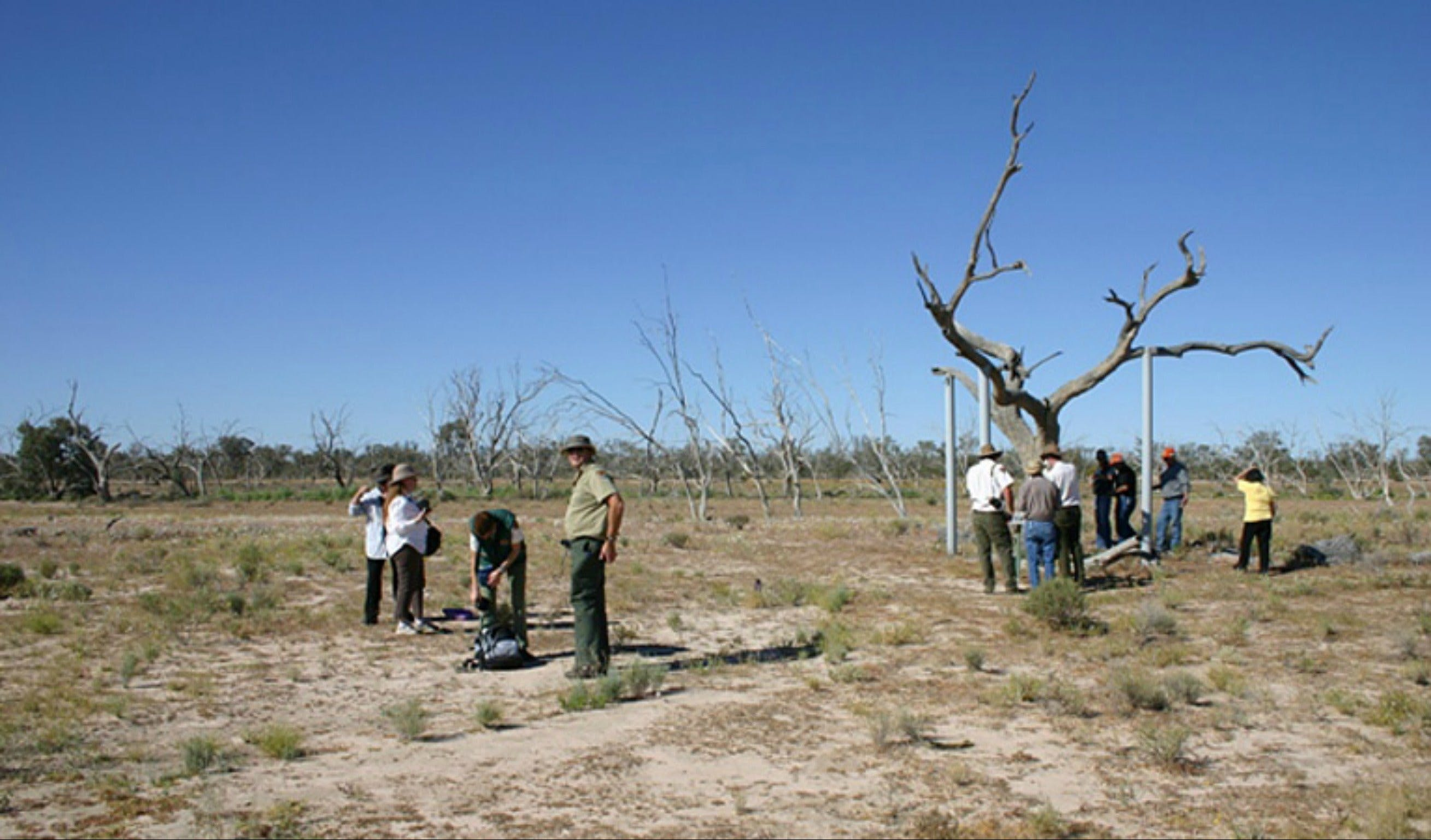 Sturt's tree walk - Lightning Ridge Tourism