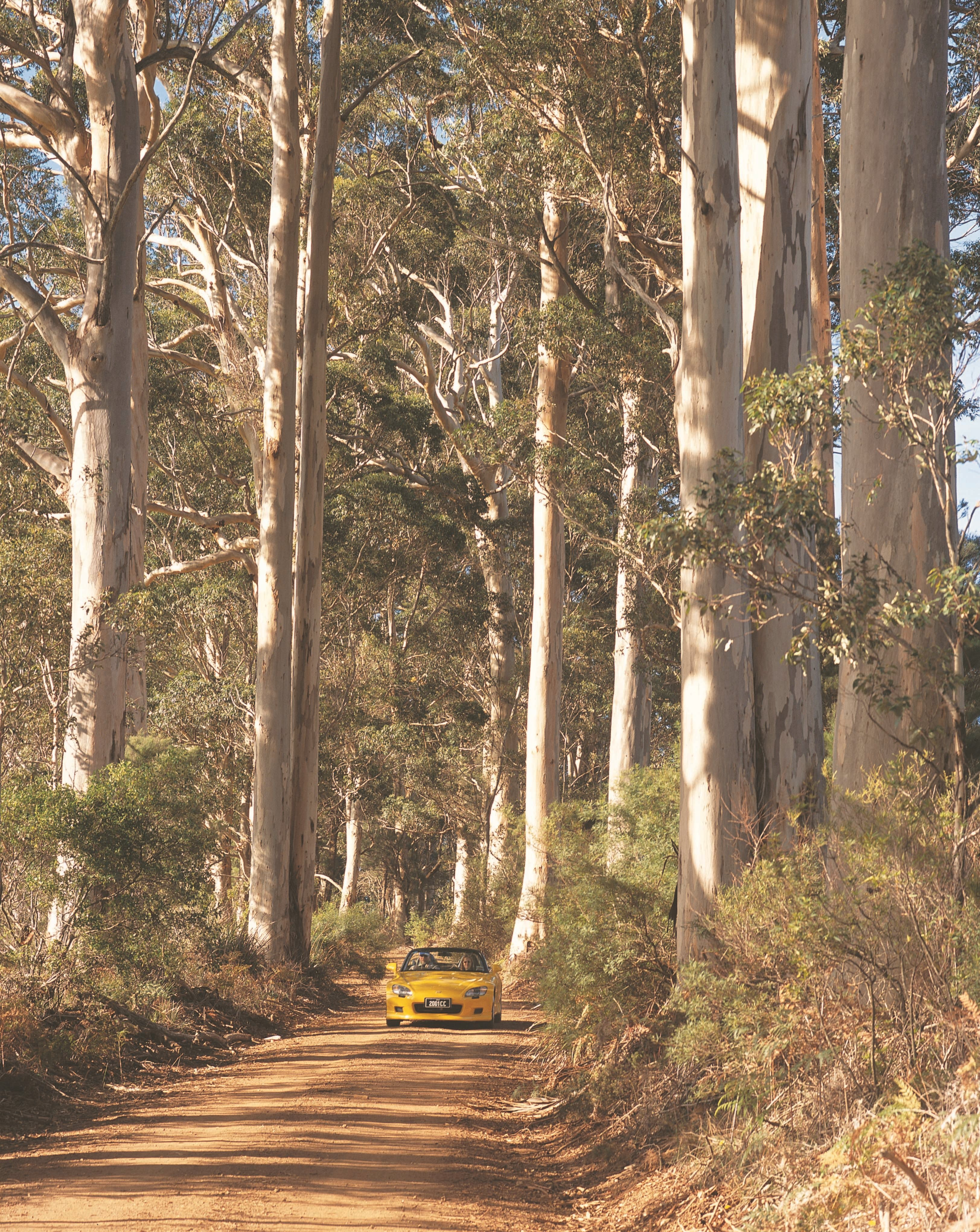 The Great Forest Trees Drive - Lightning Ridge Tourism