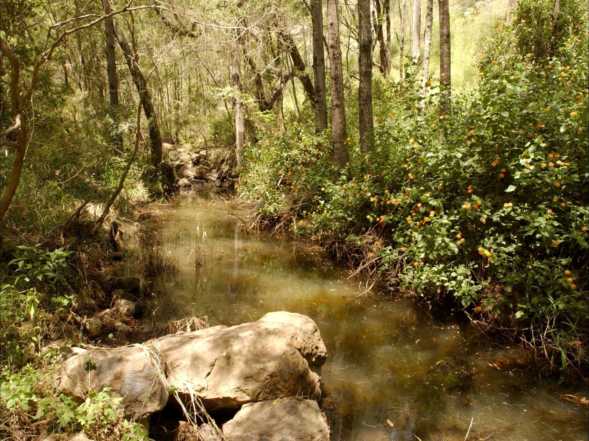 Sandy Creek Track - Lightning Ridge Tourism