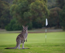 Anglesea Golf Club - Lightning Ridge Tourism