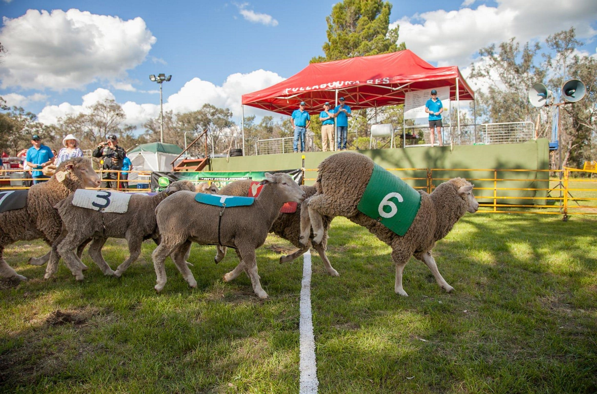 Caragabal Sheep Races - Lightning Ridge Tourism
