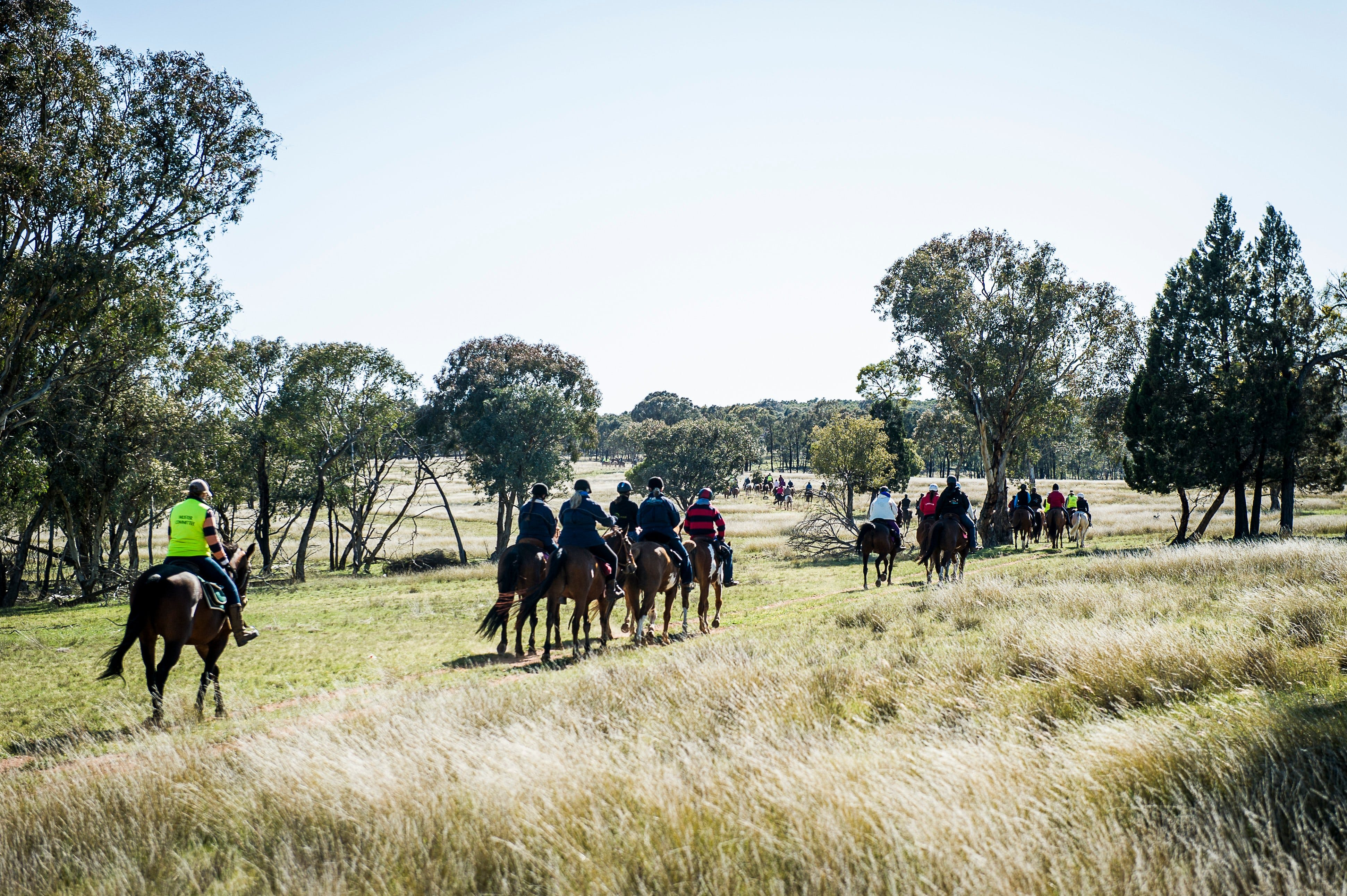 Weddin Mountain Muster - Lightning Ridge Tourism