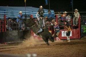 Black Opal Bull and Bronc Ride - Lightning Ridge Tourism