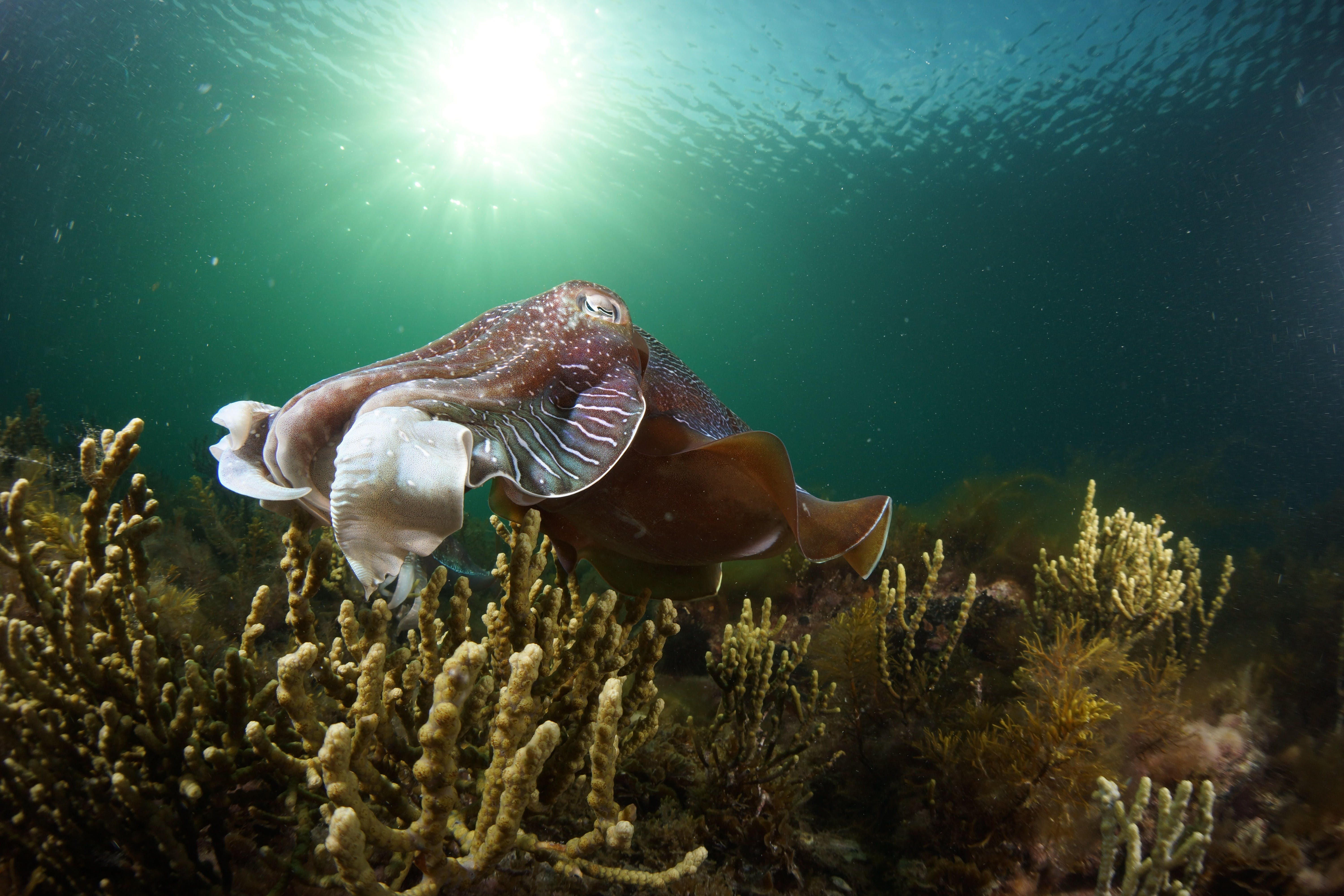 Cuttlefish Diving  Snorkeling EVERYDAY May -August - Lightning Ridge Tourism