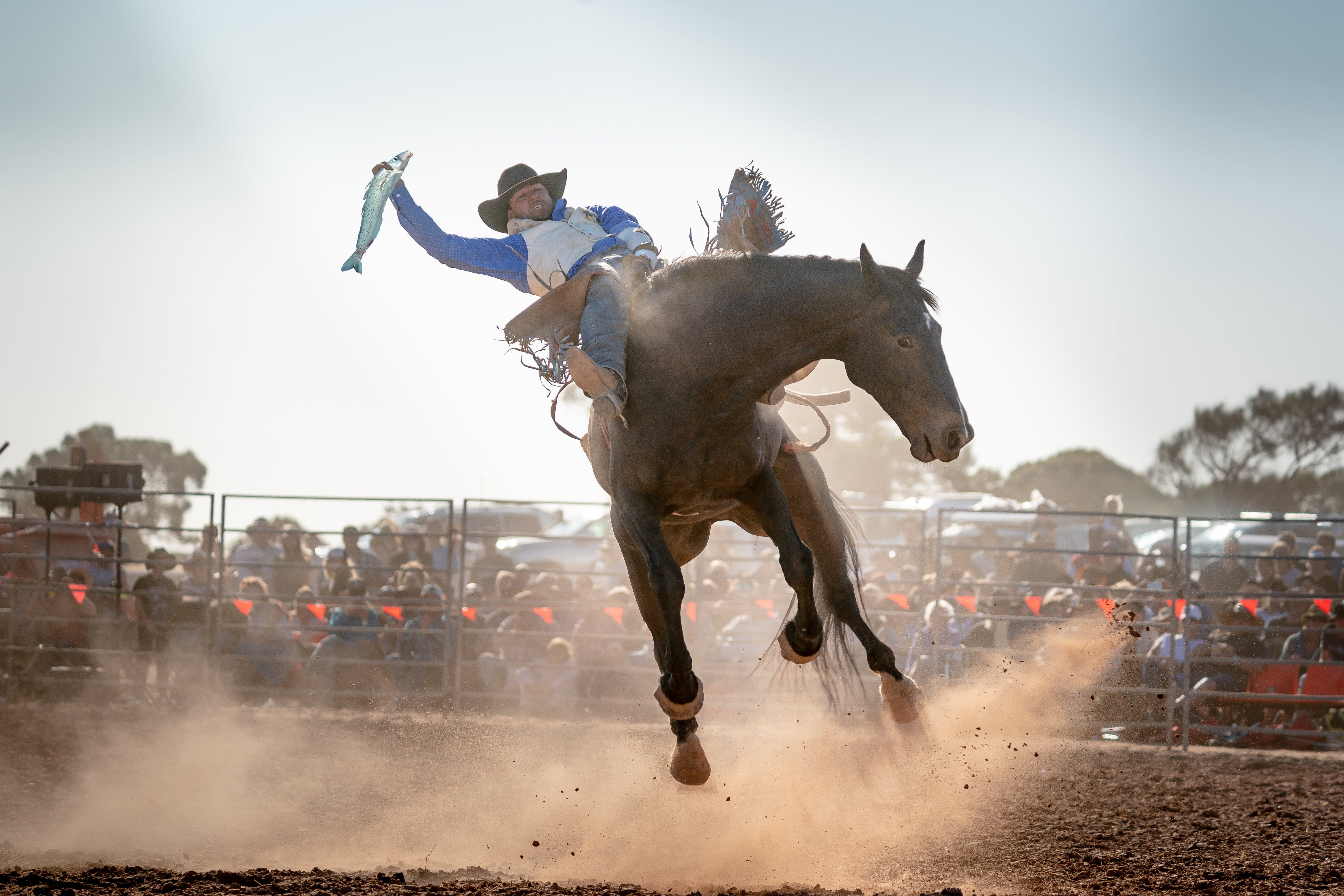 Rodeo by the Sea - Streaky Bay - Lightning Ridge Tourism